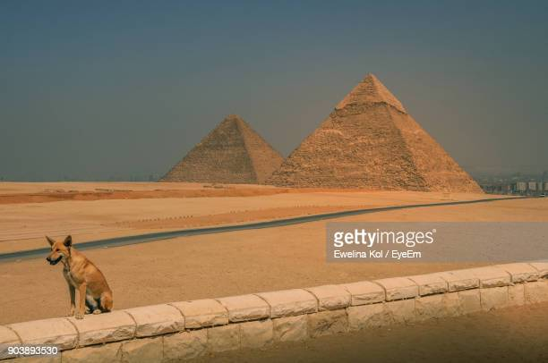 Stray Dog On Retaining Wall Against Pyramids
