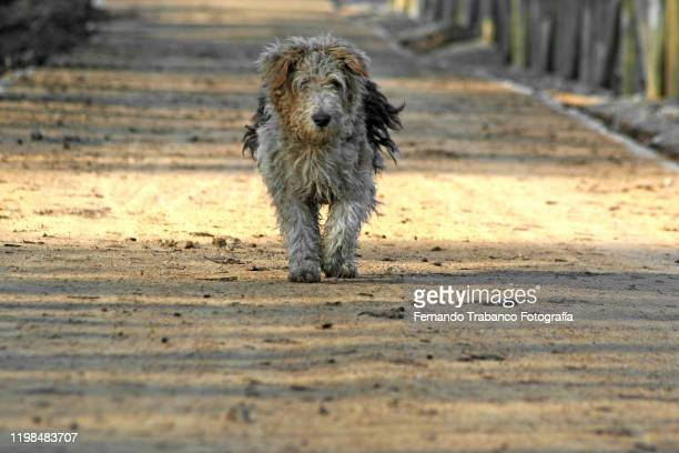 stray dog - dog pound stock pictures, royalty-free photos & images