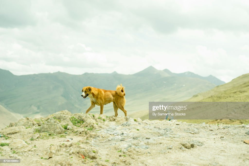Stray dog : Stock Photo