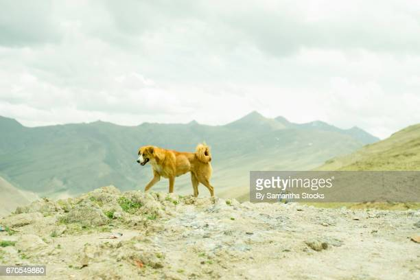 stray dog - samantha stocks stock pictures, royalty-free photos & images