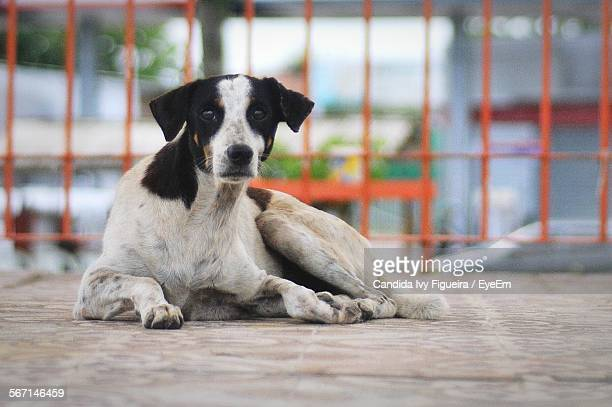 Stray Dog Sitting On Floor