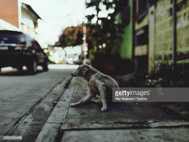 stray dog sitting on sidewalk in city - stray animal stock pictures, royalty-free photos & images