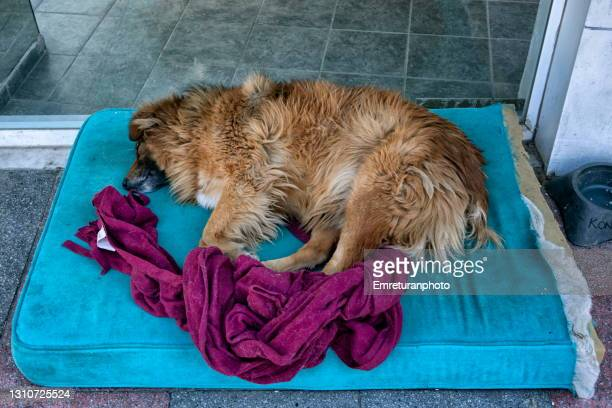 stray dog sleeping on a mat on the sidewalk. - emreturanphoto stock pictures, royalty-free photos & images