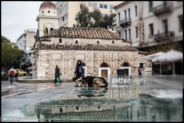 A stray dog sleeps in a main square in the centre of Athens on January 27 2015 in Athens Greece Stray dogs are a common sight in Athens with many...