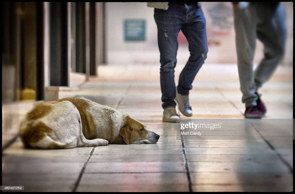 Street Dogs Of Athens : News Photo
