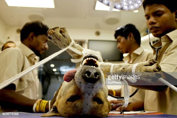 A stray dog sleeps on the table of a movable operation vehicle as veterinary workers busy in the family planning operation in the eastern Indian city...