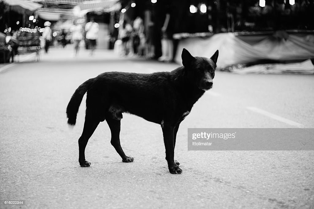 stray dog standing alone on a street,selective focus : Stock Photo