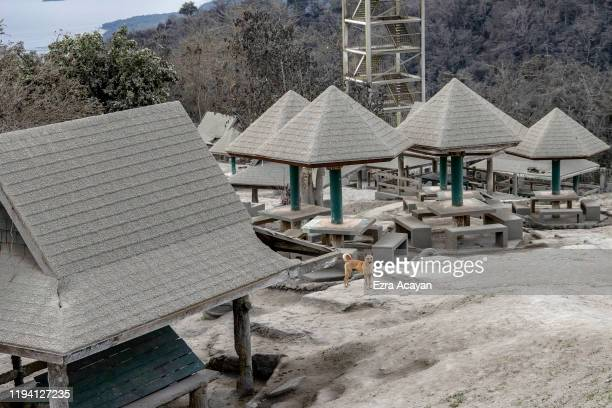 A stray dog stands next to huts covered in volcanic ash from Taal Volcano's eruption inside a closed amusement park on January 17 2020 in Tagaytay...
