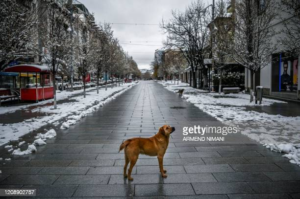 TOPSHOT A stray dog stands on a snowcovered deserted square in Pristina on April 1 during a governmentimposed curfew from 5pm to 5am as part of...