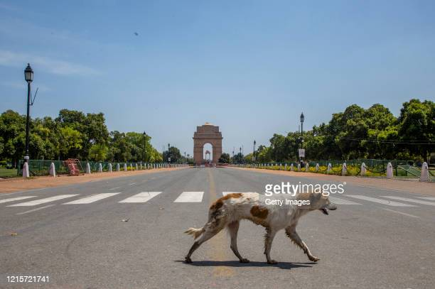 A stray dog walks in front of an empty historic India Gate as nationwide lockdown continues over the highly contagious coronavirus on March 30 2020...