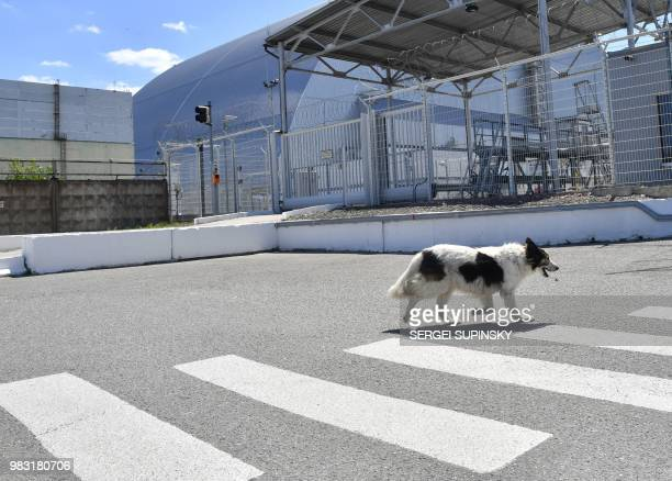 A stray dog walks past the confinement covering the 4th block of the Chernobyl nuclear power plant on June 8 2018 The restricted zone around...