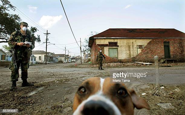 A stray dog walks with US Army National Guard soldiers from Oklahoma conducting door to door searches September 12 2005 in New Orleans Louisiana...