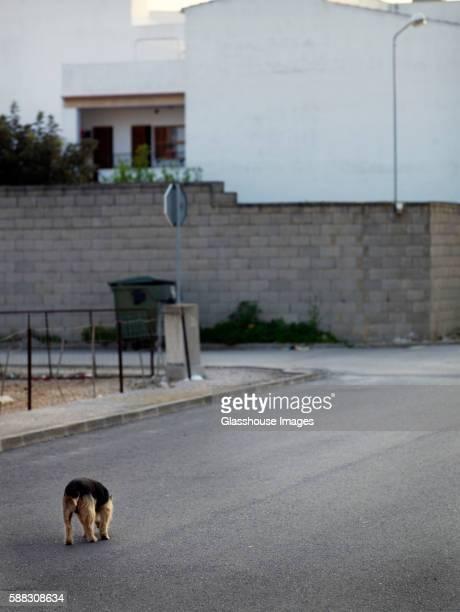 Stray Dog Wandering on Street, Rear View