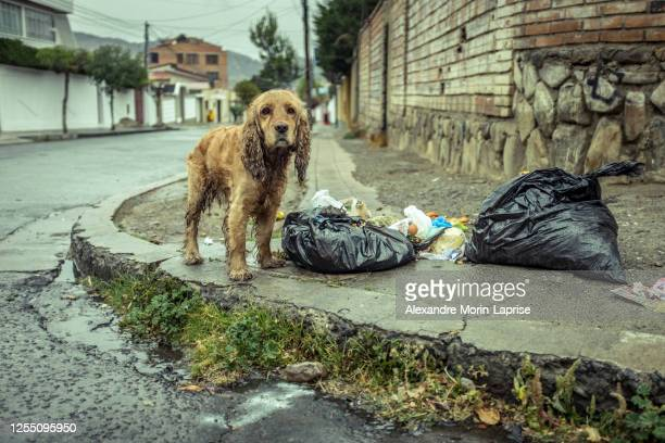 stray dog wet from rain near some garbage bags - rescue stock pictures, royalty-free photos & images