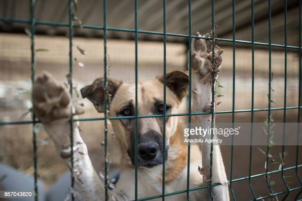 Stray dogs are seen in a cage at the shelter in Cayyolu district of Ankara Turkey on October 3 2017 This animal shelter hosts 450 different species...