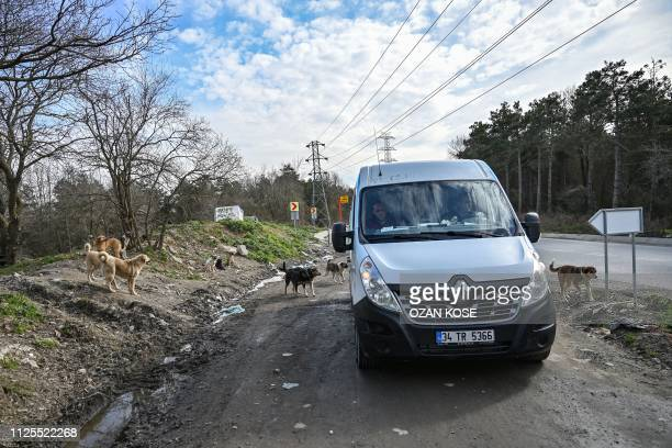 Stray dogs gather near a feeding van of Istanbul metropolitan municipality on January 30 2019 at Sariyer northern Istanbul In 2018608 animals were...