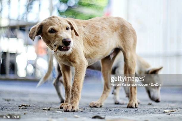 stray dogs on street - stray animal stock pictures, royalty-free photos & images