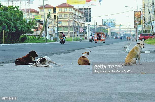 Stray Dogs Relaxing On Street