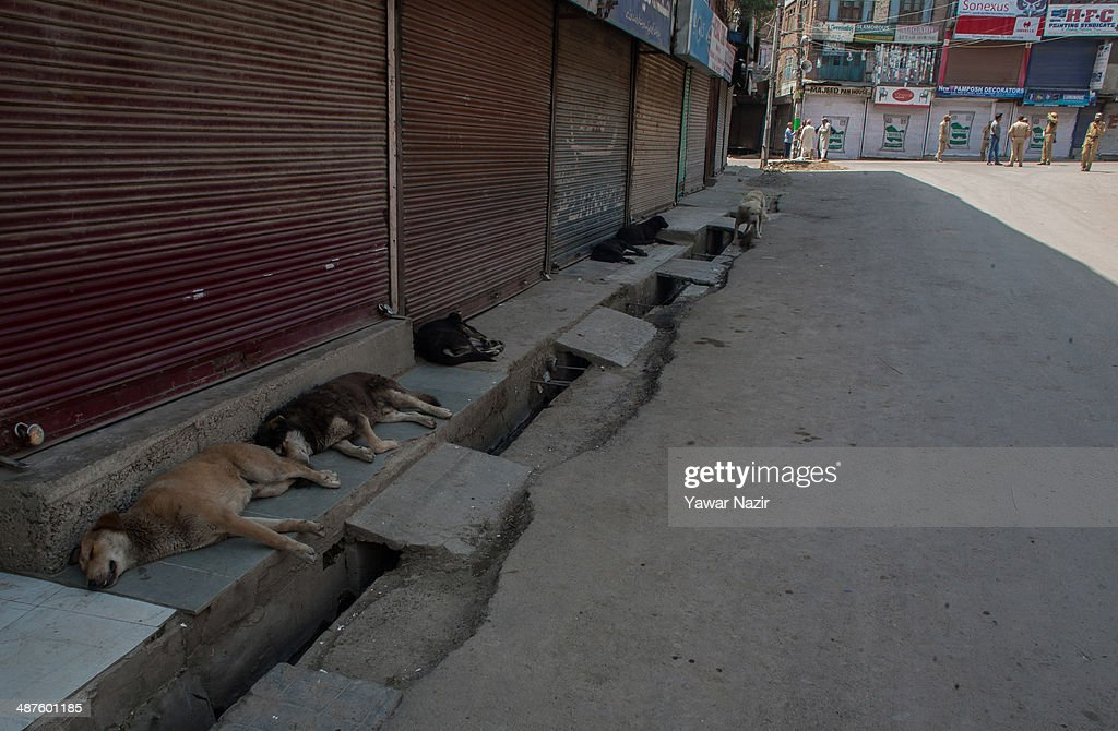 Stray dogs rest in front the shuttered shops as Indian policemen guard the deserted main city during a curfew following a killing of a youth on May 01, 2014 in Srinagar, the summer capital of Indian-administered Kashmir, India. Kashmir remained on boil a day after a youth was shot dead by Indian armed government forces in the Old City of Srinagar. Two persons including a woman were also wounded when Indian forces fired at Kashmiri stone hurling protesters who were shouting 'down with India' slogans. The Indian forces in Kashmir clamped a stringent curfew in the region to stop anti-India protests from escalating while as a shutdown was observed to protest the killing of the youth.