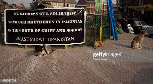 Stray dogs sit in front the banner hoisted on fence for the victims killed in a militant attack in Peshawar at Grand Mosqueon December 17 2014 in...