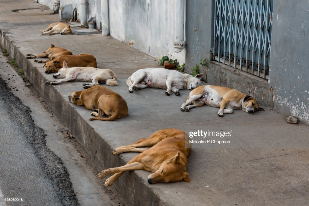 Stray dogs sleeping on the pavement, Pondicherry, India - Let sleeping dogs lie! : Stock Photo
