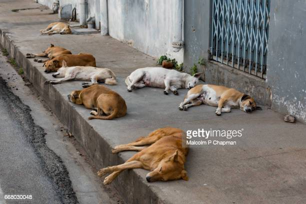 Stray dogs sleeping on the pavement, Pondicherry, India - Let sleeping dogs lie!