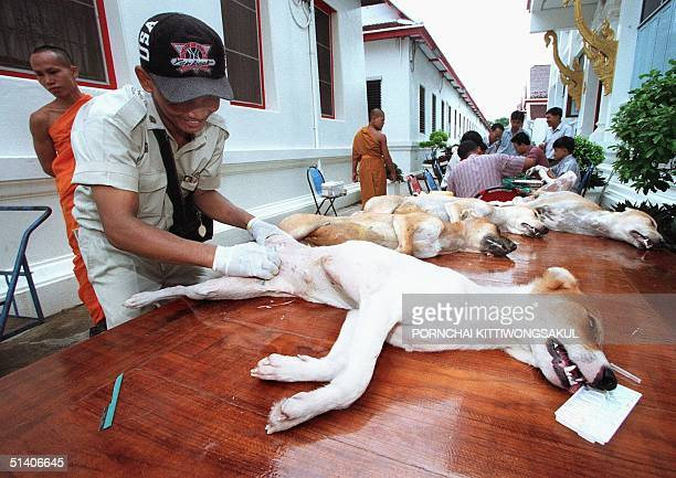 Stray dogs undergo a sterilization operation while Buddhist monks walk by 15 July at a temple in the Thai capital The Bangkok city administration...