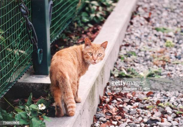 stray ginger cat - stray animal stock pictures, royalty-free photos & images