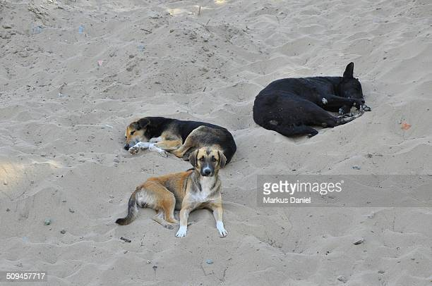 Stray homeless dogs at Huacachina Oasis