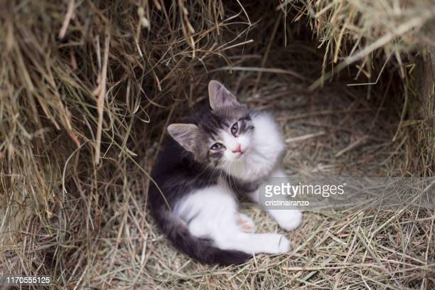 stray kitten - abandoned stock pictures, royalty-free photos & images