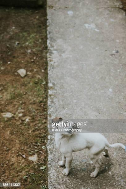 Stray Puppy Dog
