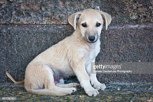 stray puppy - daniele carotenuto stock pictures, royalty-free photos & images