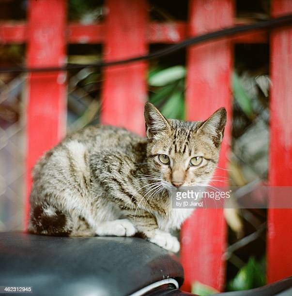 Straycat of Tamsui