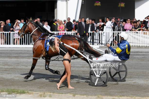 A streaker stands on the race track in front of Smoken Up before the start of NZ Trotting Cup Day at Addington Raceway on November 8 2011 in...