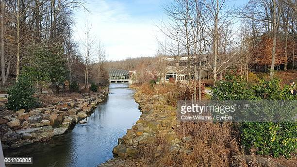 stream amidst bare trees at forest - bentonville stock pictures, royalty-free photos & images