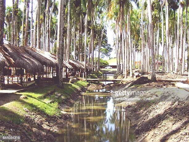 Stream Amidst Palm Trees On Field
