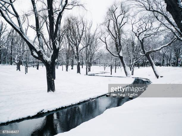 Stream Amidst Snow Covered Bare Trees During Snowfall