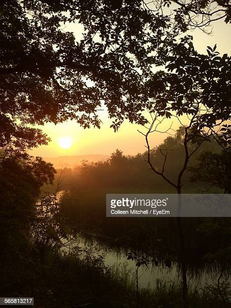 stream amidst trees in forest against sky during sunset - brook mitchell stock pictures, royalty-free photos & images