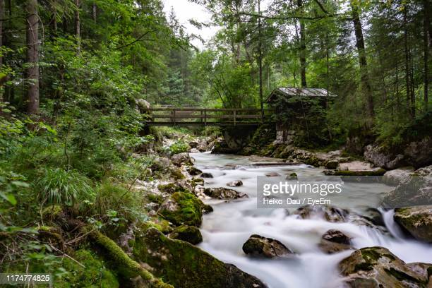 stream amidst trees in forest - berchtesgaden stock pictures, royalty-free photos & images