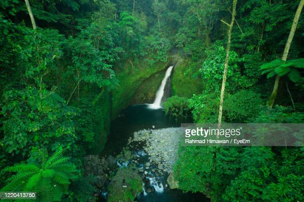 stream amidst trees in forest - rahmad himawan stock pictures, royalty-free photos & images