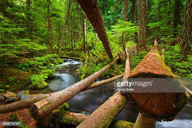 stream and fallen logs in mt hood national forest - mt hood national forest stock pictures, royalty-free photos & images