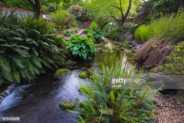 stream at crystal springs rhododendron garden - heather brooke ストックフォトと画像