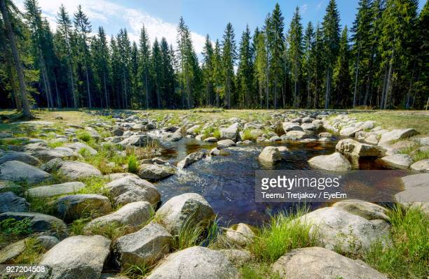 Stream At Forest On Sunny Day