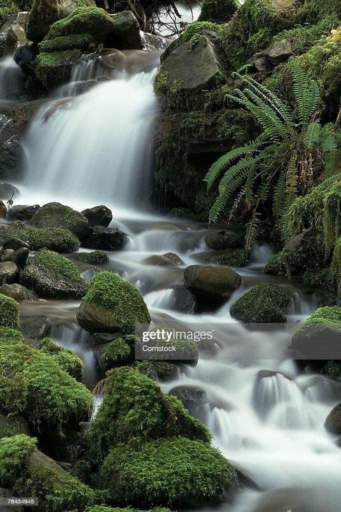 Stream cascading over mossy rocks : Stockfoto