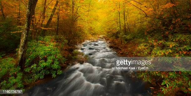 stream flowing amidst trees in forest during autumn - kaal stock pictures, royalty-free photos & images