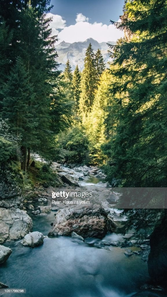 Stream Flowing Amidst Trees In Forest : Foto de stock