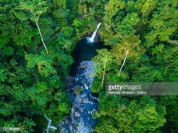 stream flowing amidst trees in forest - rahmad himawan stock photos and pictures