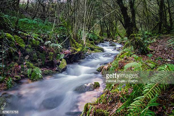 Stream Flowing At Forest