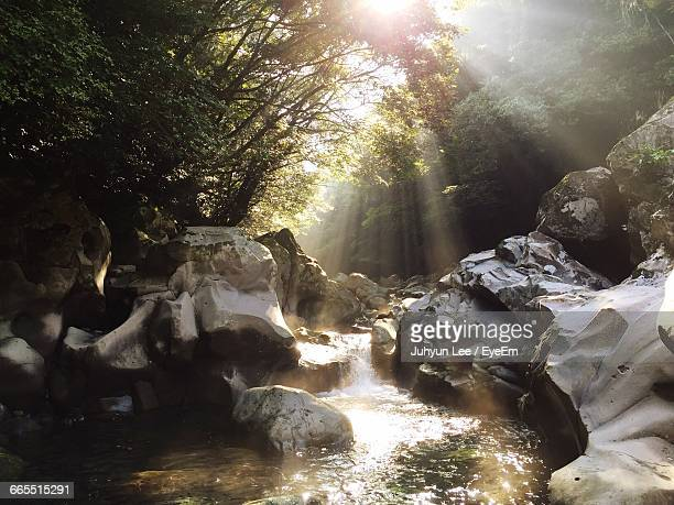 Stream Flowing In Forest Against Sunbeams