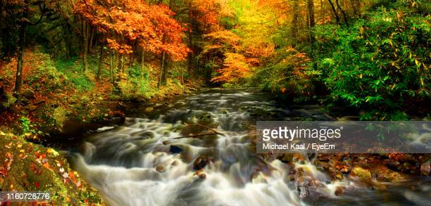 stream flowing in forest during autumn - kaal stock pictures, royalty-free photos & images